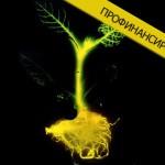 Фото. Синтетические растения