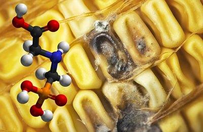 Фото. Разрушение кукурузы