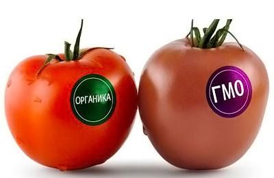 Фото. Виды помидоров