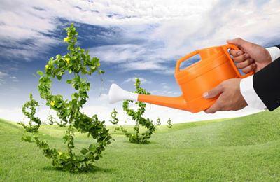 Фото. Выращивание денег в поле