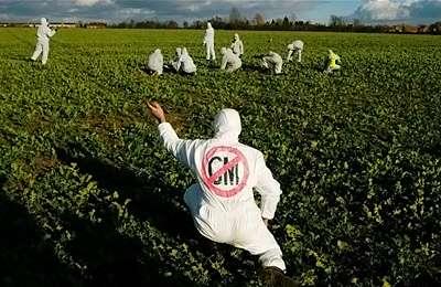 Фото. ГМО разрешают в России