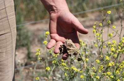 аргентинцы возмущены ГМО