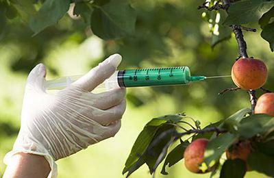 Фото. ГМО в Ивано-Франковске