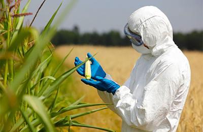 Фото. Ввозимая в Китай кукуруза