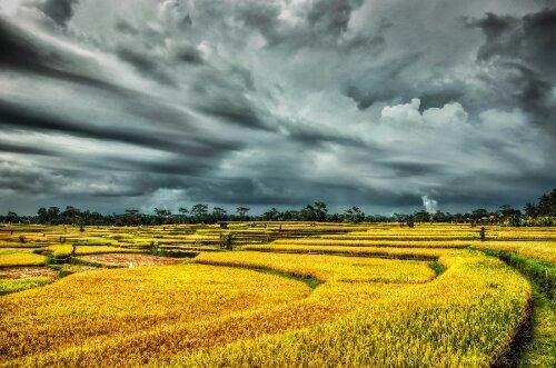 Красивые поля золотистого цвета