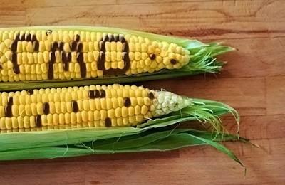 Сравнение двух кукуруз