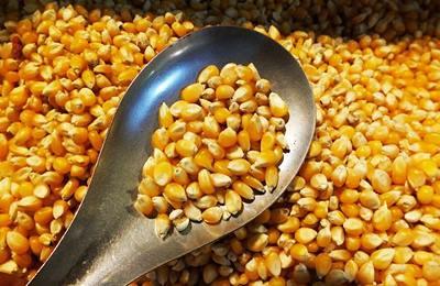 Фото. Китай отказывает американской кукурузе