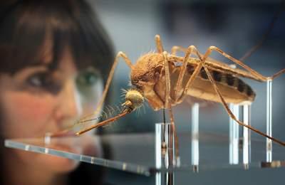 Фото. Большой модифицированный комар
