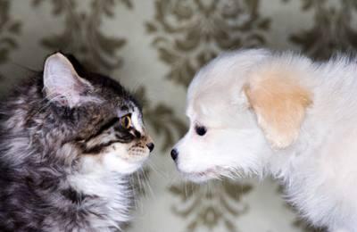 Фото. Собака приняхивается к коту
