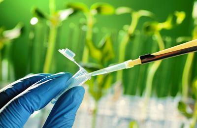Фото. Эти ГМО растения удивляют