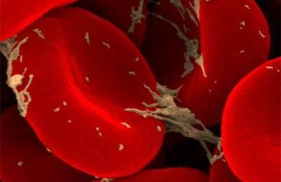 Фото. Распространение эритроцитов