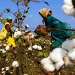 возрождение испытаний ГМО в Индии