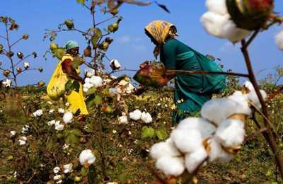 утверждение ГМО в Индии