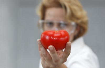 Фото. Вот какой ГМО помидор
