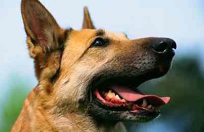 Фото. Собака услышит все болезни