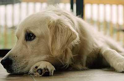 Фото. Собаки схожи с нами
