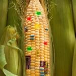 Техническая кукуруза