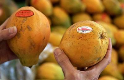 Фото. Какая папайя ввозится в Европу