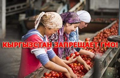 Фото. Кыргызстанские девушки перебирают помидоры