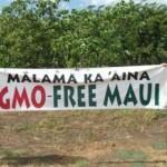 гавайцы выступают против ГМО