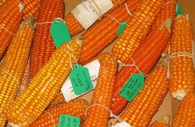 натуральная кукуруза с витамином А