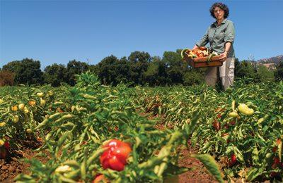 казахская женщина собирает урожай