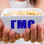 могут ли нести опасность ГМО