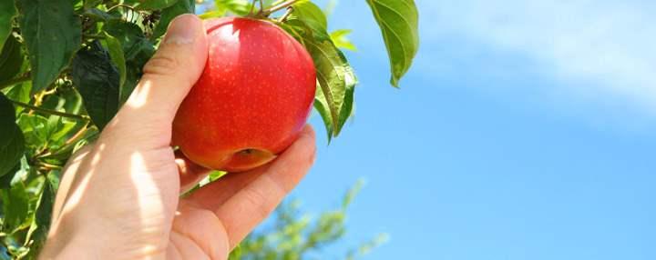 избавление фруктами от ГМО