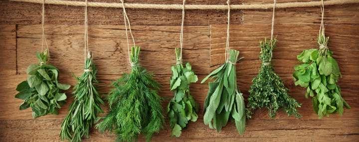 лекарственные травы выводят тяжелые металлы