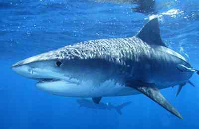 исследование зрения акул