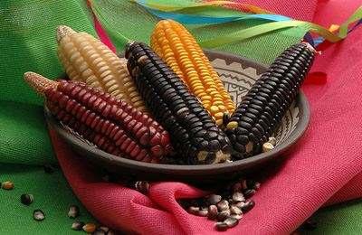 традиционная курузуза выращиваемая в Мексике