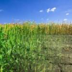 исследование о разрушение среды