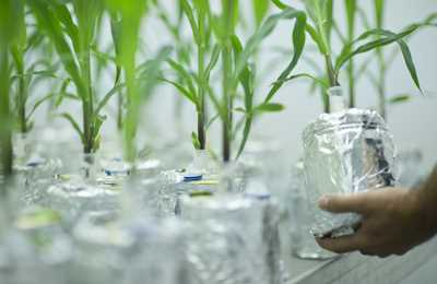 устойчивые растения