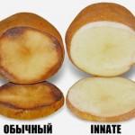 потемневший картофель