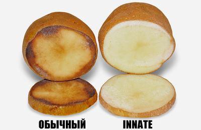 трансгенный картофель сравнение