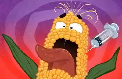 укол кукурузы