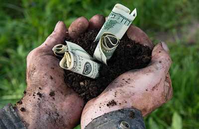 загрязнение органических культур ГМО