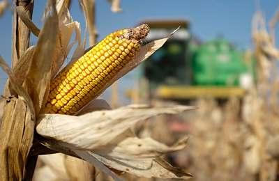 Европа разрешила импорт ГМО