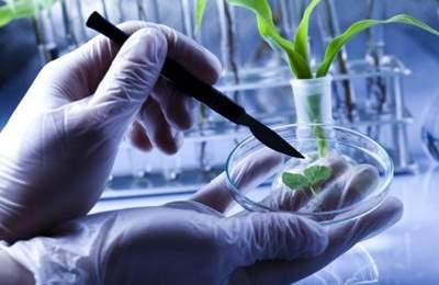 мораторий на ГМО в России
