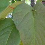 растения получают азот из своих листьев