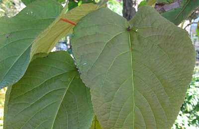 азот из листьев