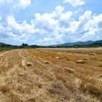 сербские поля напичканы глифосатом
