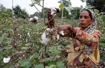 убытки фермеров в Пакистане