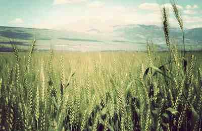 Новосибирск и ГМО