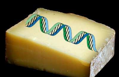 трансгенный сыр