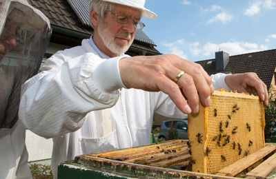 пчеловоды против трансгенов