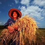 доход органического фермера