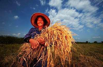 фермер выращивающий органическую продукцию
