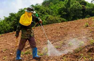 поля заливают пестицидами