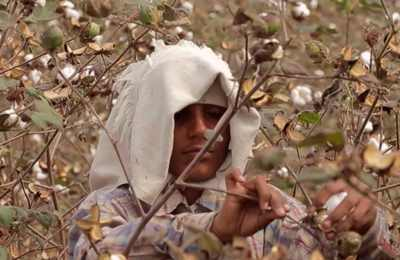 исследование самойубиств в Индии из-за ГМО хлопка